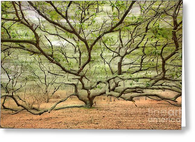 Commercial Photography Digital Greeting Cards - Gentle Thoughts - A Tranquil Moments Landscape Greeting Card by Dan Carmichael