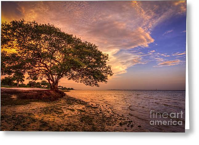 Jacksonville Greeting Cards - Gentle Whisper Greeting Card by Marvin Spates