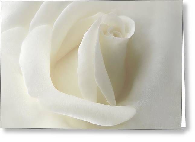 Gentle White Rose Flower Greeting Card by Jennie Marie Schell