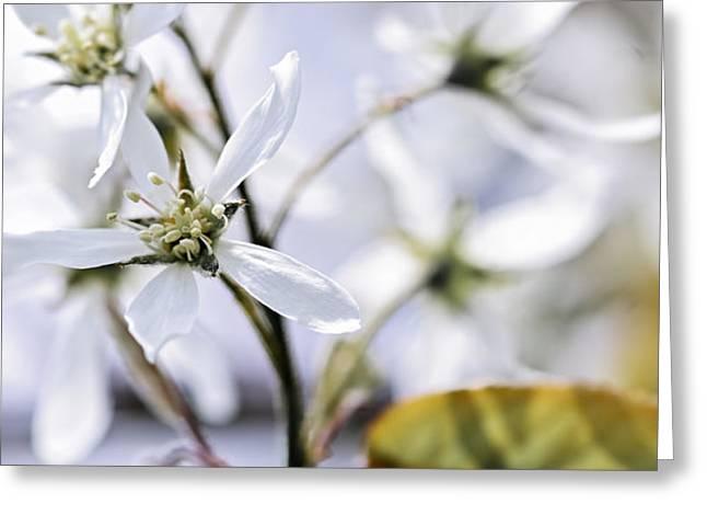 Gentle white spring flowers Greeting Card by Elena Elisseeva