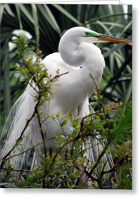Photos Of Birds Greeting Cards - Gentleman Greeting Card by Skip Willits
