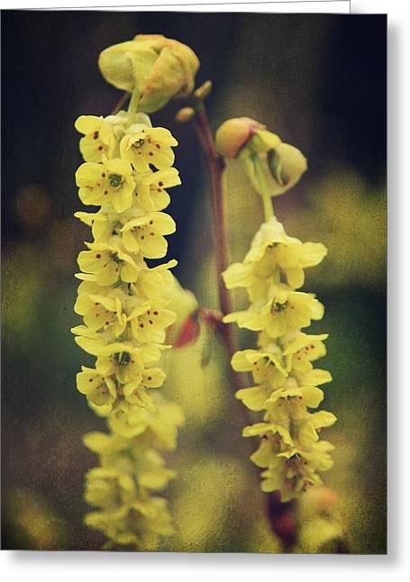 Texture Floral Greeting Cards - Gently Falling Greeting Card by Laurie Search