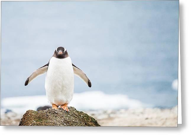 Standing Pyrography Greeting Cards - Gentoo Penguin Greeting Card by Kongsak Sumano