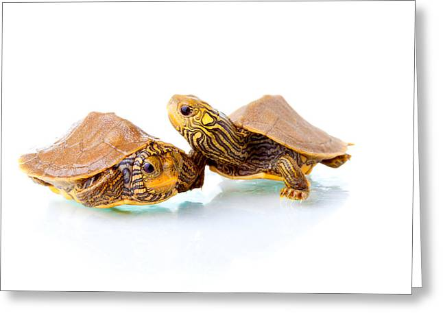Shell Pattern Greeting Cards - George and Zippy Greeting Card by Alexey Stiop