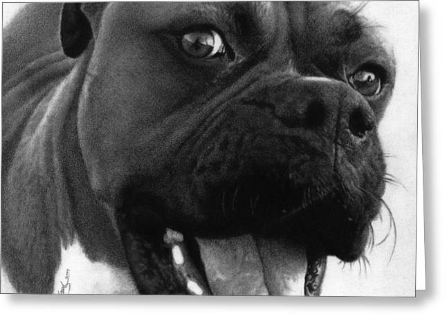 George - Boxer Dog Greeting Card by Justin Clark