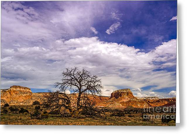 Mountain Cabin Greeting Cards - Georgia OKeefes Tree Caught Between Kitchen and Matrimonial Mesa - Ghost Ranch Abiquiu New Mexico Greeting Card by Silvio Ligutti