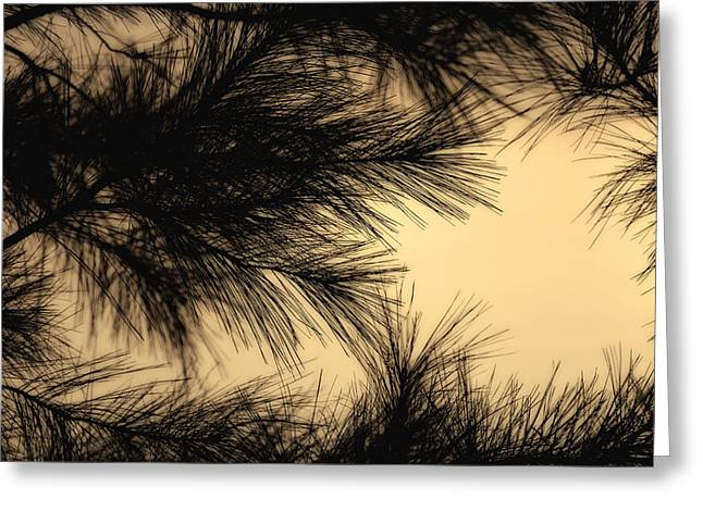 Original Photographs Greeting Cards - Georgia Pine 2 Greeting Card by Gary Migues