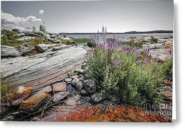 Georgian Bay Greeting Cards - Georgian Bay IV Greeting Card by Elena Elisseeva