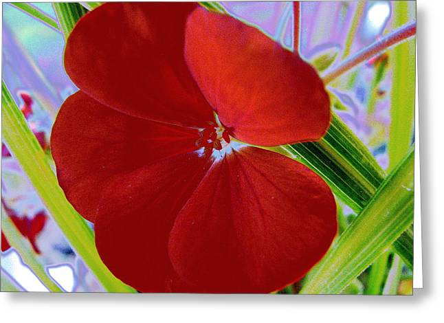Red Geraniums Digital Greeting Cards - Geranium by Earls Photography Greeting Card by Earl  Eells a