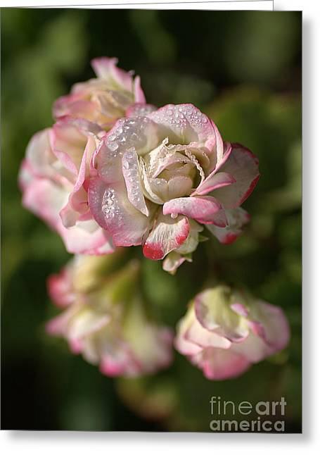 Geranium Flowers Greeting Card by Joy Watson