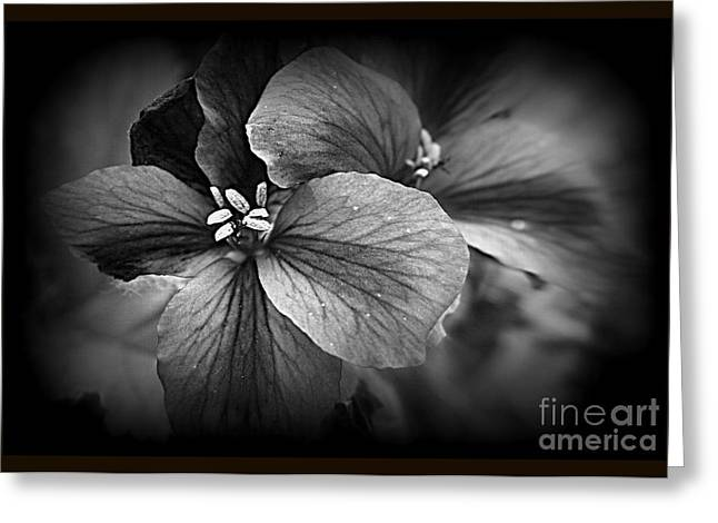 Purchase Greeting Cards - Geranium Flowers Greeting Card by Kay Novy