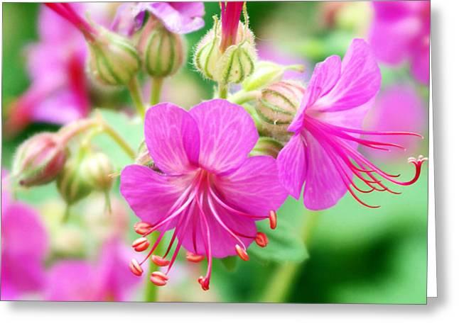 Power Plants Greeting Cards - Geranium Flowers Greeting Card by Violeta Ianeva
