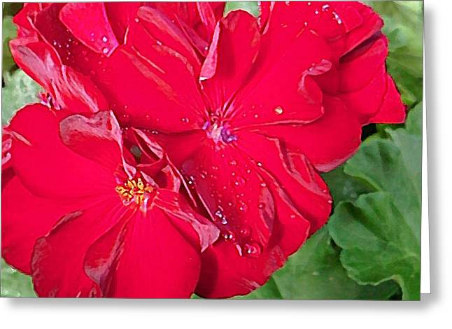 Red Geraniums Mixed Media Greeting Cards - Geranium in Red Greeting Card by Mark Brady