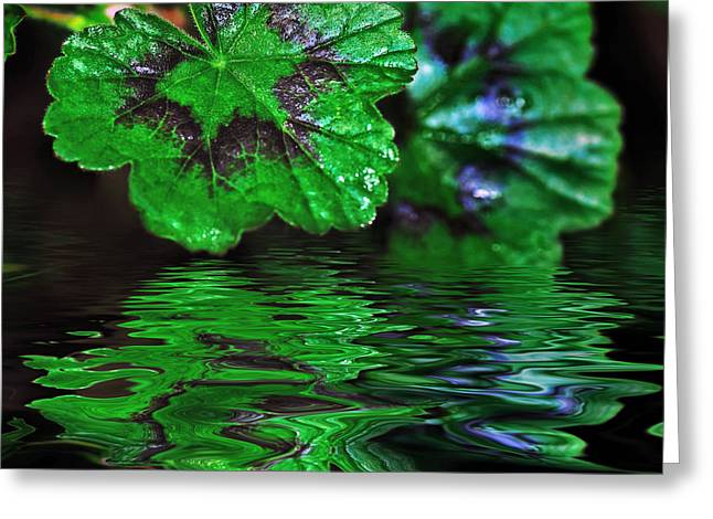 Reflection On Pond Greeting Cards - Geranium Leaves - Reflections on Pond Greeting Card by Kaye Menner