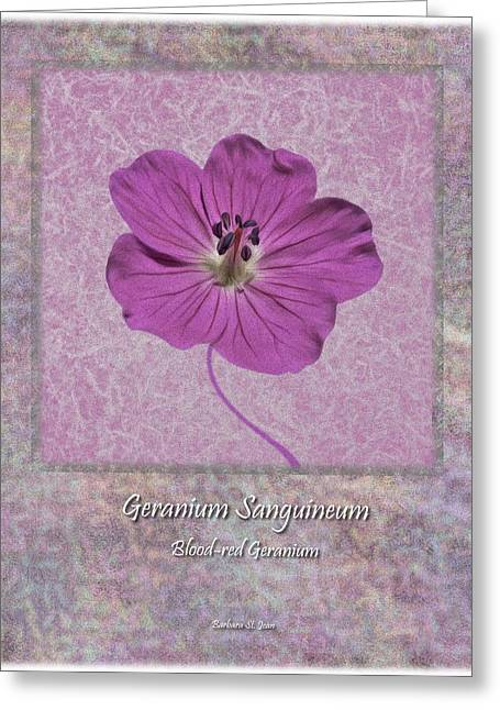 Red Geraniums Greeting Cards - Geranium Purple Poster 4 Greeting Card by Barbara St Jean