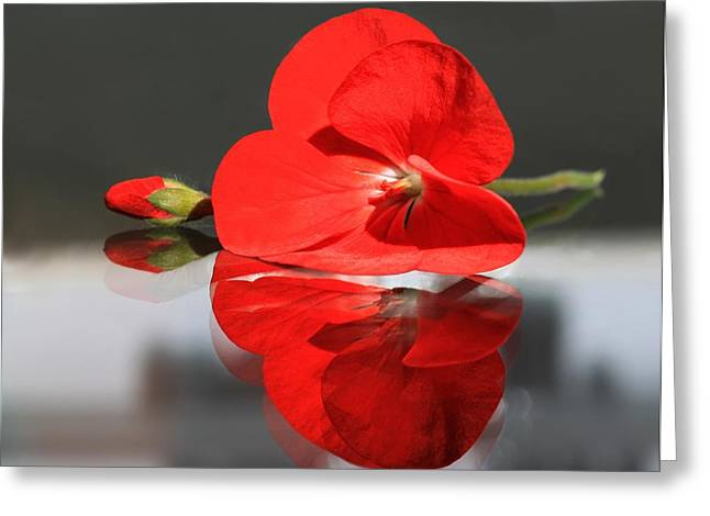 Single Geranium Flower And Bud Greeting Cards - Geranium Reflections 2 Greeting Card by  Andrea Lazar