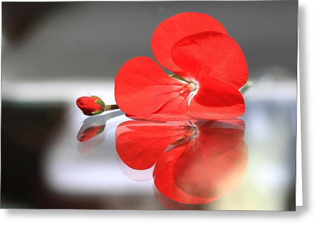 Single Geranium Flower And Bud Greeting Cards - Geranium Reflections Greeting Card by  Andrea Lazar