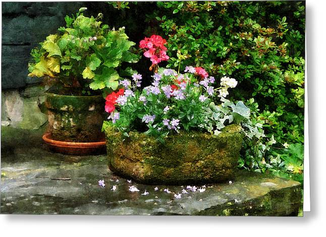 Suburban Greeting Cards - Geraniums and Lavender Flowers on Stone Steps Greeting Card by Susan Savad