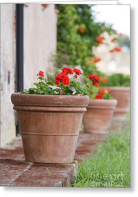 Country Cottage Greeting Cards - Geraniums in a terracotta pot Greeting Card by Ruth Black