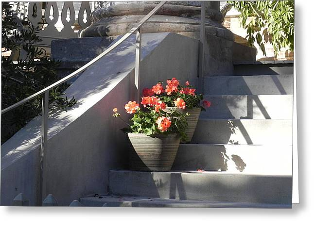 Stepping Stones Greeting Cards - Geraniums Look Better in Beaufort Greeting Card by Patricia Greer