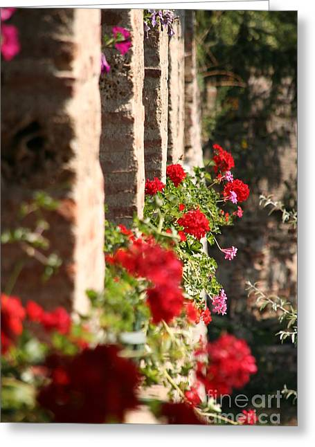 Red Geraniums Greeting Cards - Geraniums Greeting Card by Mircea Nicolescu Photography