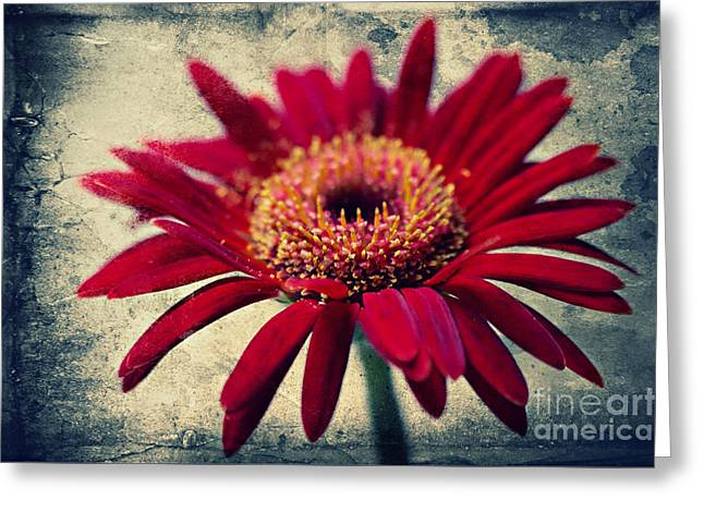 Textured Floral Mixed Media Greeting Cards - Gerbera Greeting Card by Angela Doelling AD DESIGN Photo and PhotoArt