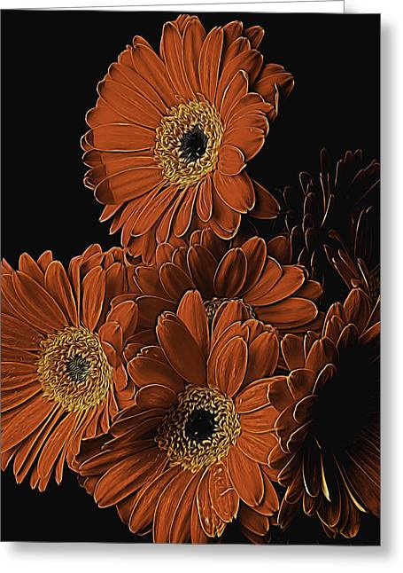 Gerbera Greeting Cards - Gerbera Daisy Abstract Greeting Card by Garry Gay