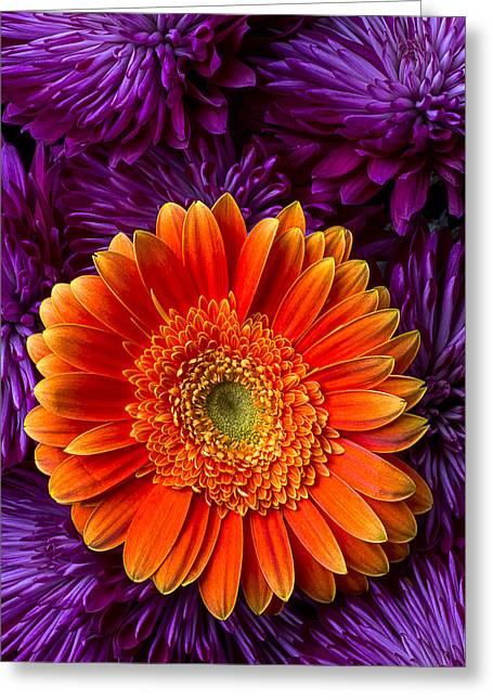 Gerbera Greeting Cards - Gerbera daisy and mums Greeting Card by Garry Gay