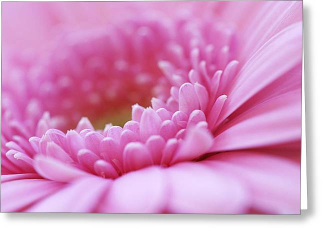 Gerbera Daisy Flower - Pink Greeting Card by Natalie Kinnear