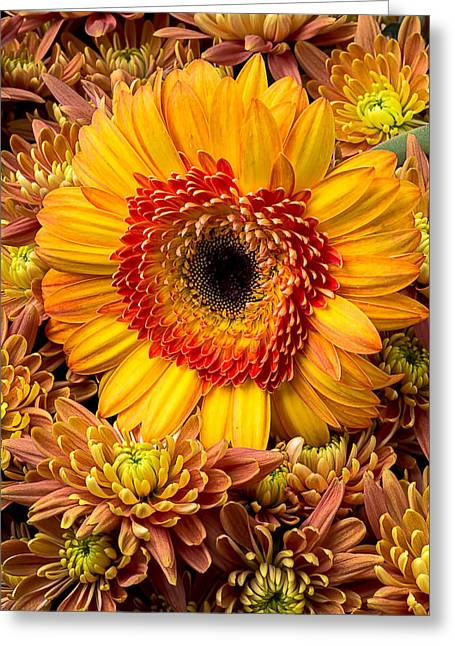 Mum Greeting Cards - Gerbera daisy with mums Greeting Card by Garry Gay