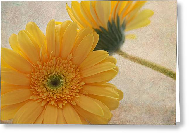 Gerbera Dasiy Greeting Card by Kim Hojnacki