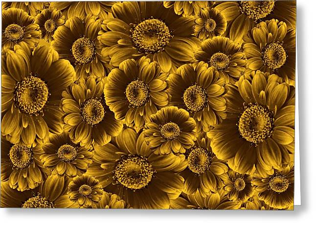 Cabin Wall Greeting Cards - Gerbera Flowers Awash in Sepia   Greeting Card by David Dehner