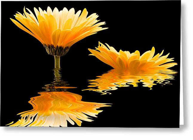 Undulating Greeting Cards - Gerbera reflection Greeting Card by Jean Noren