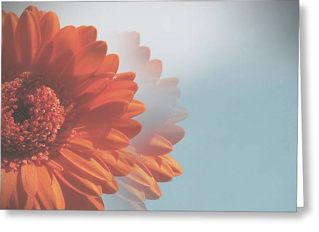 Barberton Daisy Greeting Cards - Gerbera Salutations Greeting Card by Nomad Art And  Design