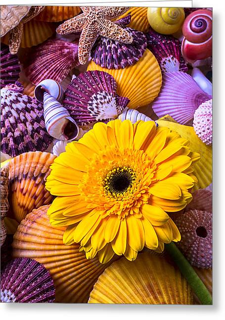 Shell Texture Greeting Cards - Gerbera With Seashells Greeting Card by Garry Gay