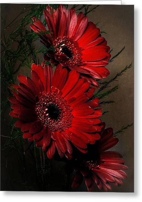 Photographs With Red. Greeting Cards - Gerberas.  Greeting Card by Hugo Bussen