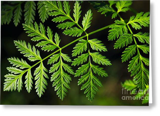 Flourished Greeting Cards - Gereric vegetation Greeting Card by Carlos Caetano