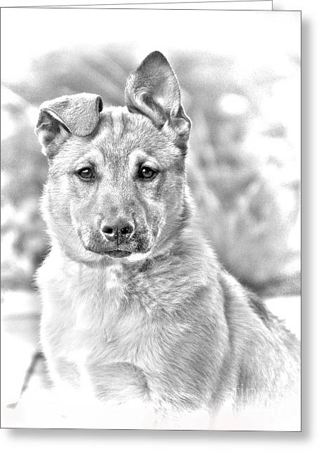 Dog Photographs Greeting Cards - German Shepard Puppy Greeting Card by James BO  Insogna