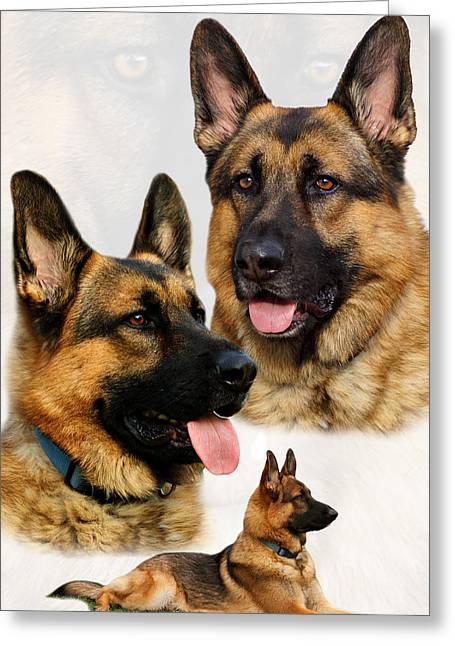 Photo Collage Greeting Cards - German Shepherd Collage Greeting Card by Sandy Keeton