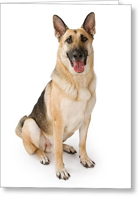 Dog Photographs Greeting Cards - German Shepherd Dog Isolated on White Greeting Card by Susan  Schmitz