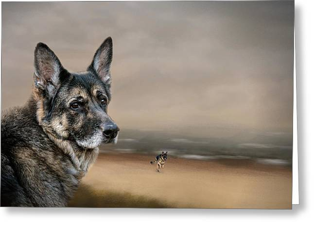 Guard Dog Greeting Cards - German Shepherd Dreaming Of The Beach Greeting Card by Jai Johnson