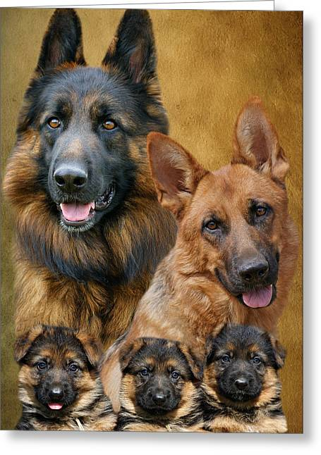 Indiana Dog Greeting Cards - German Shepherd Family Collage Greeting Card by Sandy Keeton
