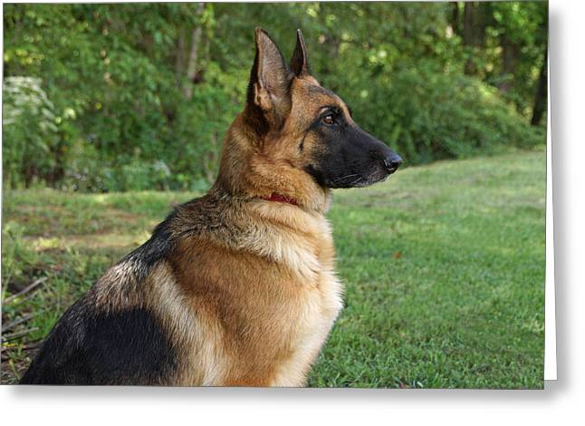 Indiana Art Greeting Cards - German Shepherd Profile Greeting Card by Sandy Keeton