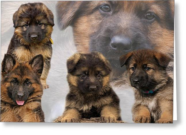Indiana Art Greeting Cards - German Shepherd Puppy Collage Greeting Card by Sandy Keeton