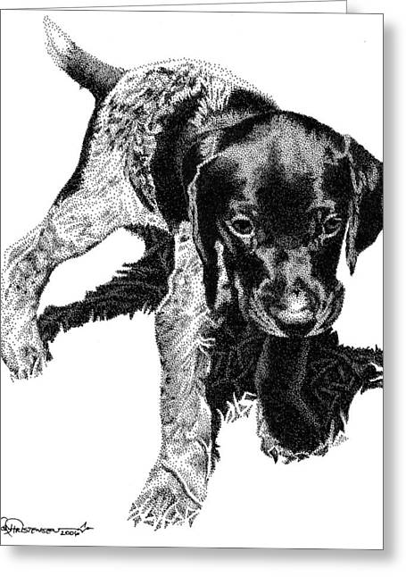 Dog Drawings Greeting Cards - German Shorthair Greeting Card by Rob Christensen