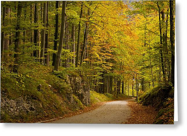 Recently Sold -  - Roadway Greeting Cards - Germany, Bavaria, Schwangau, Forest © Greeting Card by Tips Images