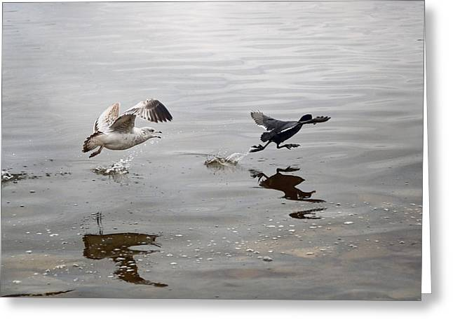 Flying Seagull Greeting Cards - Get Back Here.... Greeting Card by Steven  Michael