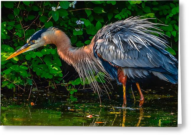 Bird Rookery Swamp Greeting Cards - Get Fluffed Greeting Card by Brian Stevens