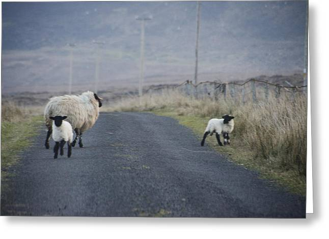 Get Greeting Cards - Get Out of the Road Greeting Card by Bill Cannon