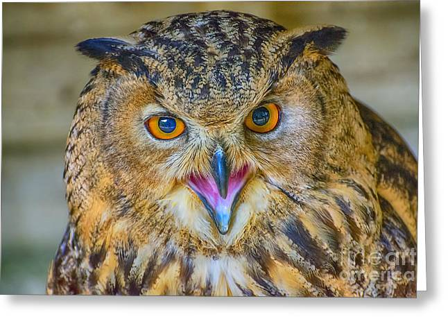 Nocturnal Animal Print Greeting Cards - Get outta my Face Greeting Card by Chris Thaxter
